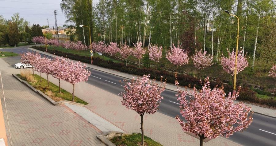 V Novém Sedle mají nejkrásnější alej Karlovarského kraje