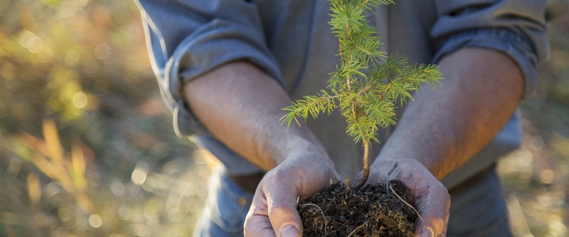 Dobrovolníci se mohou zapojit do sázení stromků