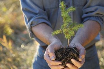 Cheb , sázení stromků, zeleň,