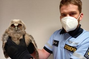 Policisté zachránili kalouse ušatého