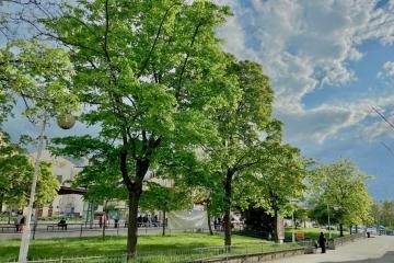 U karlovarské Tržnice se musí pokácet 17 stromů