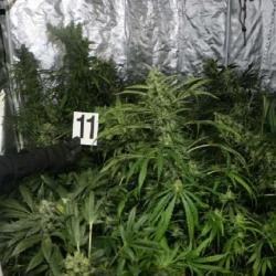 Zahradní domek proměnil na pěstírnu marihuany