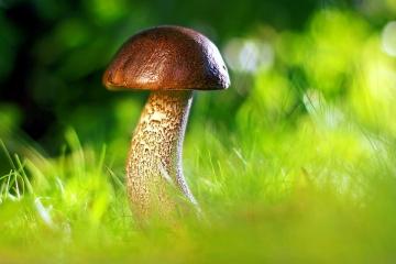 Kam na houby? Do Březové u Karlových Varů
