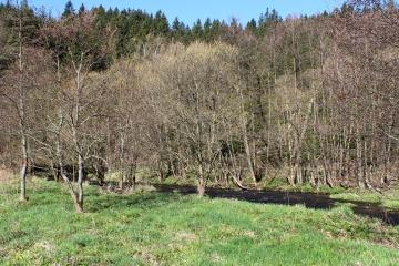 Na území Lázeňských lesů Karlovy Vary vznikne rezervace Karlův hvozd
